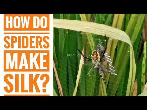 How do spiders make silk?